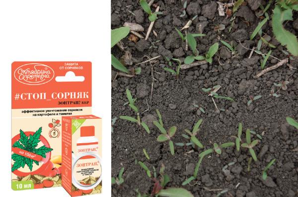 5 мифов о гербицидах на картофеле (Как правильно применять гербицид в посадках картофеля?)